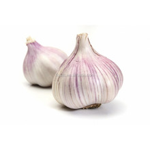China jinxiang natural garlic