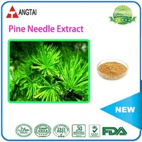 Factory Supply Pine needle P.E./Pine Needle Powder/Pine Bark Extract