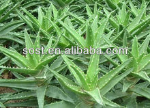 china alibaba high quality hot new products for 2015 aloe vera products