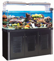 special version Fish Tank