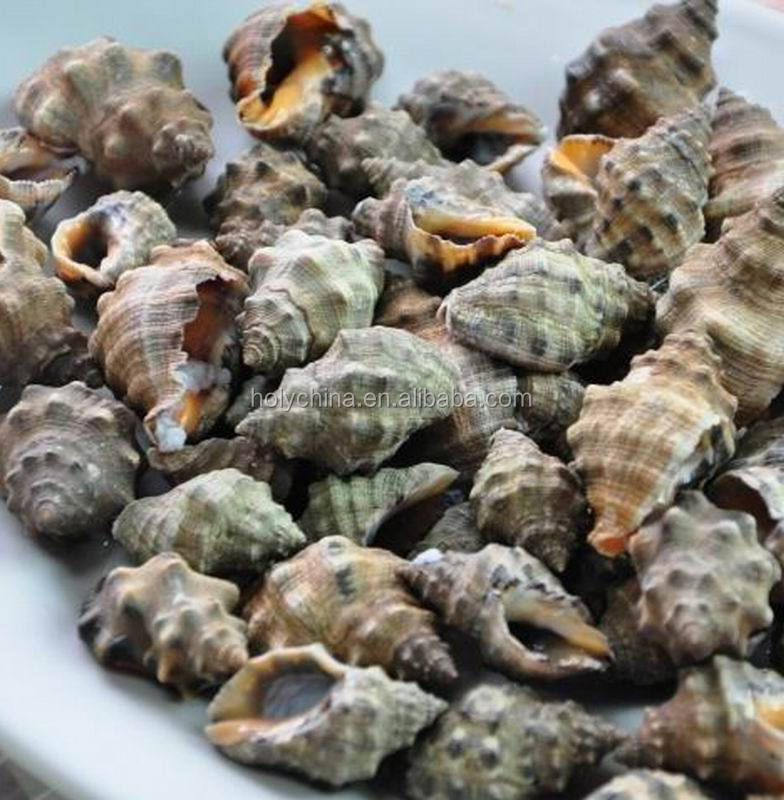 hot sale high quality whelk