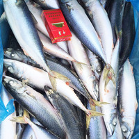 frozen blue mackerel (pacific mackerel)and fish product type sea food