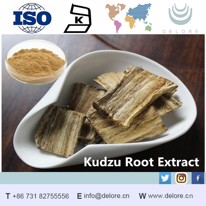 Best selling pueraria mirifica extract powder/Kudzu Root Extract