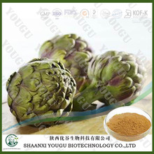Botanical extract manufacturer supply organic alcachofa artichoke