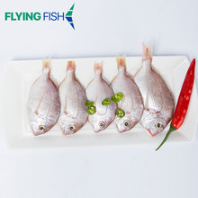 Wholesale competitive price frozen red sea bream fish