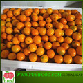 2017 kumquat fruit