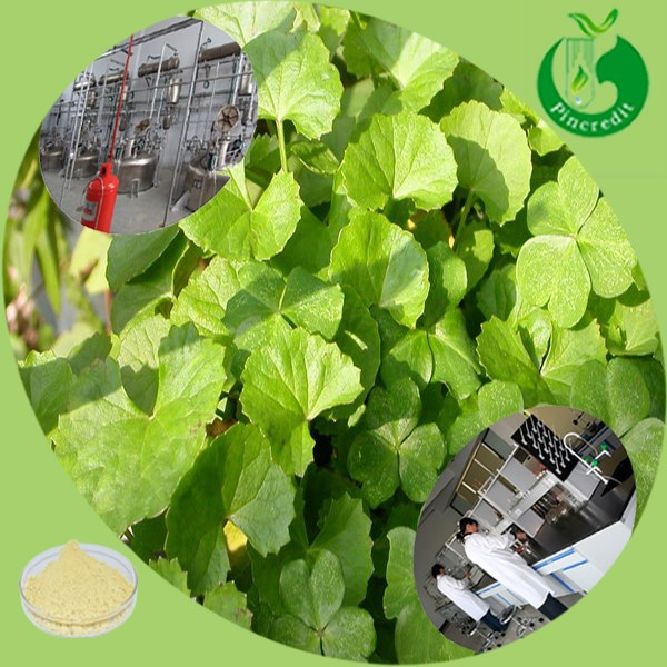 2014 natural herb gotu kola extract/asiaticoside/centella asiatica extract