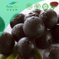NutraMax Supply - acai berry freeze dried powder,acai dried powder , acai powder