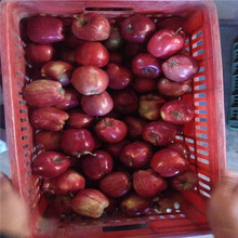 Pome Fruit Product Type and Apple Type Red Delicious Apple - Huaniu Apple