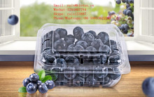 Clear Plastic PET Packing Box Blueberry PET Container