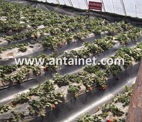 Chinese Wholesale Manufacturer PP Weed Mat for Strawberry