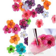 Wholesale 12 Colors Nail Art Decoration Natural Real Dry Dried Flowers
