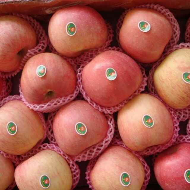 New Crop Red Gala Apple/Chinese Apple fruit/Gala from China