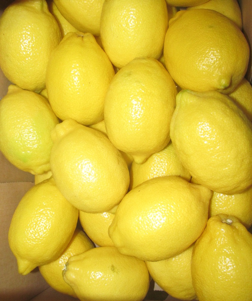 High quality citrus - fresh yellow Eureka lemon for sale