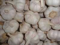Chinese Pure White Garlic Without Bottom Price