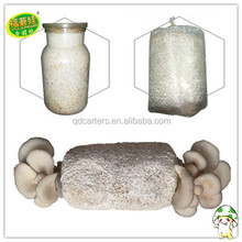 2018 lowest price high quality oyster mushroom spawn grow bags