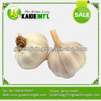 chinese fresh 4p pure white garlic 2014 crop