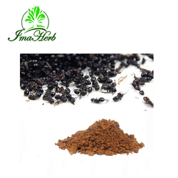GMP Manufacture ISO Certified black ant extract powder