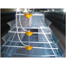 Sample A type chicken cage poultry feeding equipment for layers