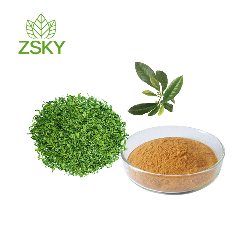 GMP Factory Supply High Quality Green Tea Leaf Extract Tea Polyphenols&EGCG 98% Powder