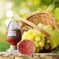 Grape Seed P.E Procyanidin 95% UV 84929-27-1