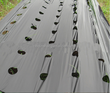 Black Plastic mulch film,Agricultural Plastic mulch film with holes