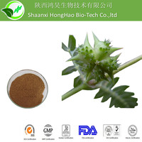 Anti-aging 100% Pure Natural UV 40% Saponin tribulus terrestris extract