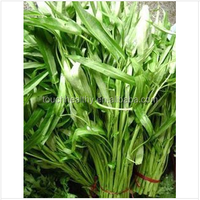 Touchhealthy supply Stock quality chinese vegetable seed/water convolvulus seeds THS425 WITT 200 gram seeds/Bag