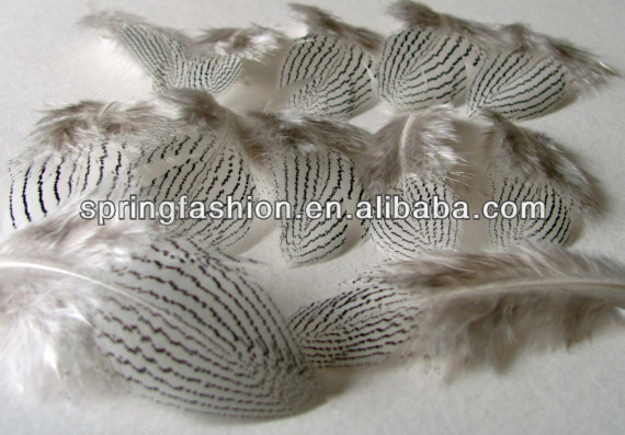 Silver Pheasant feathers-2-3 inches long