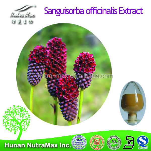 Top Quality Burnet Extract, Great Burnet Extract,Burnet Root Extract 4:1~20;1