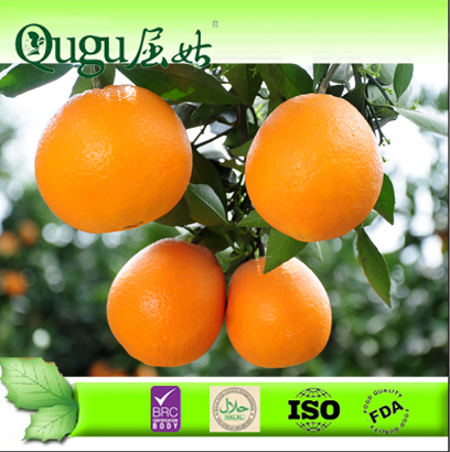 2014 Fresh navel orange