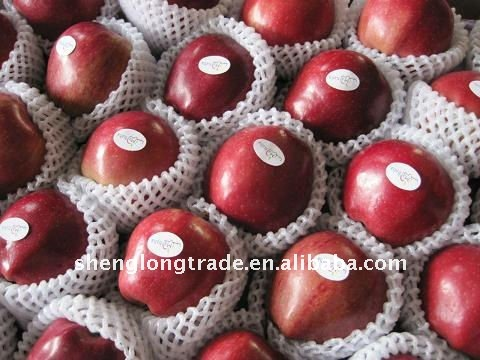 Chinese fresh red Huaniu apple