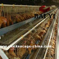 Wholesale 3 Layer Cages for Hens