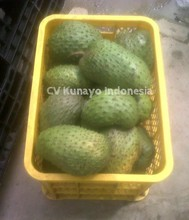 SOURSOP FRUIT FROM INDONESIA