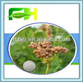 Best Quality Natural Osthole 10%-98%/CAS:484-12-8