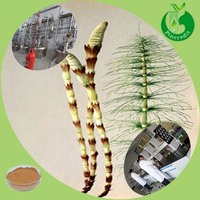 High Selling Equisetum Arvense/Horsetail Extract 7% Organic Silica