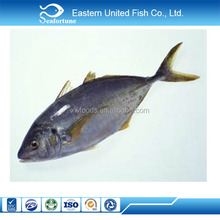 Chinese Iqf Frozen Yellowfin Tuna Price