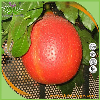 Professional Supplier Health Care Natural Pure Gac Fruit Extract ,Gac Extract