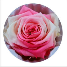 Yunnan lasting real natural Preserved Flower Stabilized Rose