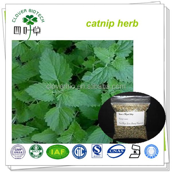 Hot sale natural catnip extract