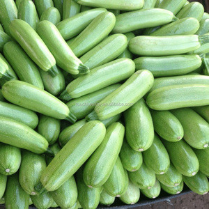 2017 Touchhealthy supply High yield and quality hybrid zucchini seeds f1