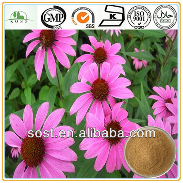 Chinese Herbal Medicine Echinacea Polyphenol Plant Extract