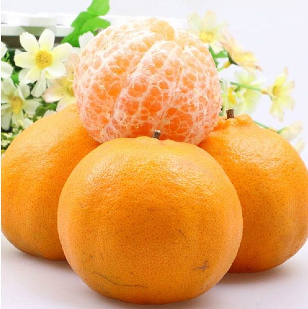 2016 Natural pollution-free Fresh Orange Fruits Mandarin Orange Citrus Quince Fruits