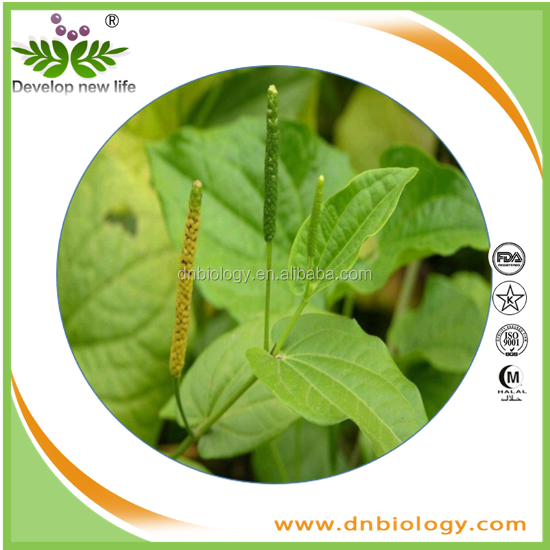 Hot sale piper longum fruit dry extract Piper longum extract,best service Hot sale piper longum fruit dry extract