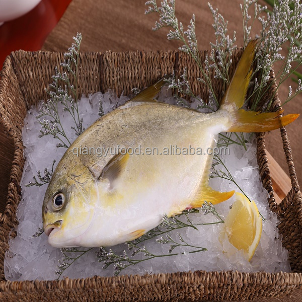 Frozen Sea Food Golden Pompano