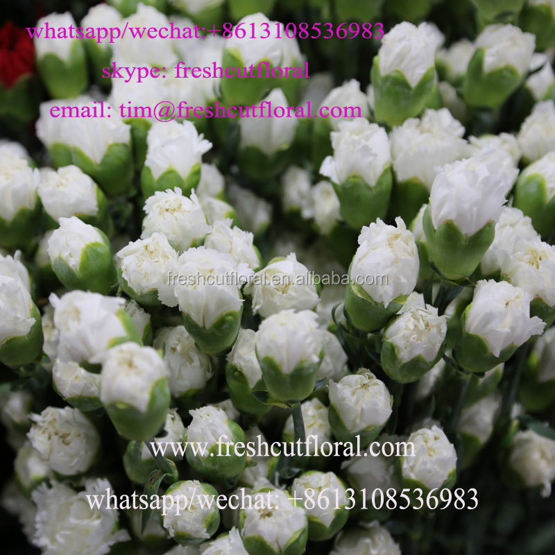 Multi-Colored Freshly Cut Carnations With Bulk Value Shipped Whole Year