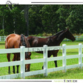 Technical High End Hot Sales Black Horse Fencing