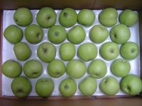 China fresh Green apples with best price
