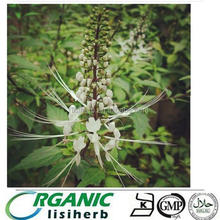 black cohosh root powder/natural black cohosh extract/black cohosh p e Hot sale !!!