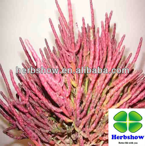 Pure salicornia seeds for planting